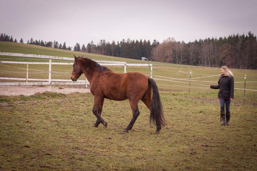 leichte Handbewegungen dirigieren das Pferd