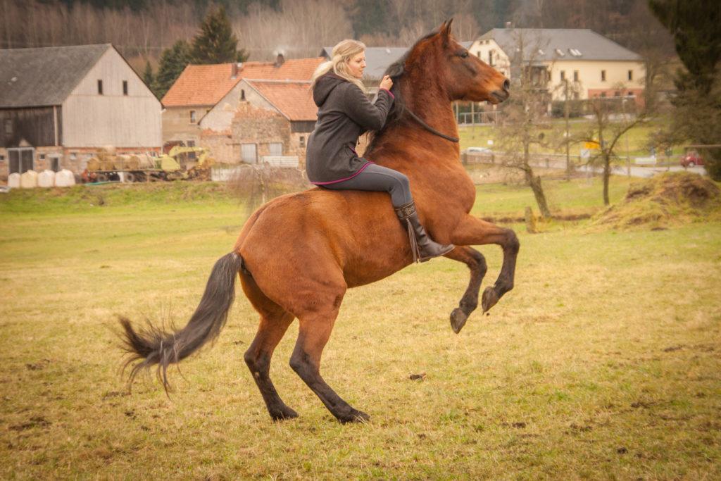 Zirkuslektion - Romina steigt auf Gavilan